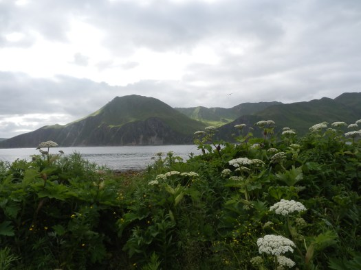 View from dock in Dutch Harbor, AK.