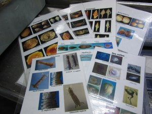 Identification guides in the wet lab.