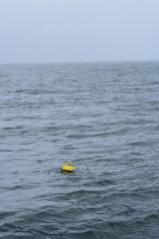 Tide Buoy near Cape Lisburne, AK