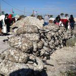 Oyster Shell Beach Stabilization