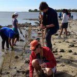 Sea grass planting