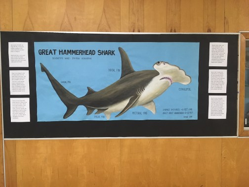 painting of Great Hammerhead shark