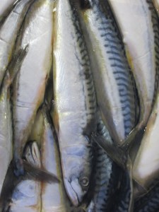 A pile of frozen mackerel used as bait.