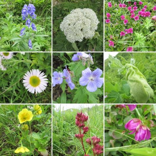 Bunker Hill wildflowers