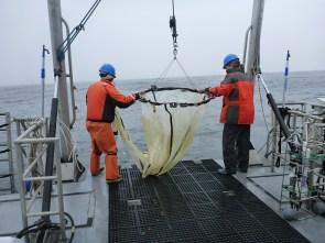deploying hoop net