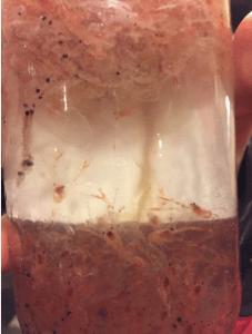 Crab larvae and krill