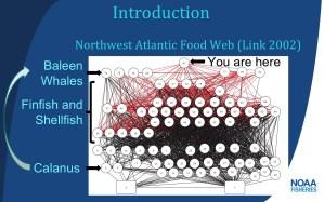Northwest Atlantic Food Web