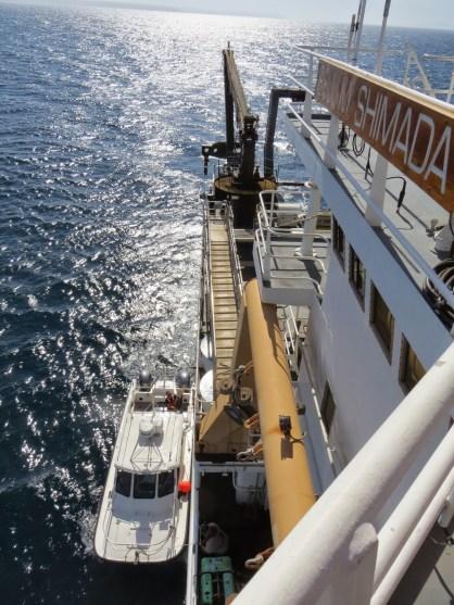 Shark Cat boat