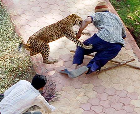 leopardG_450x365
