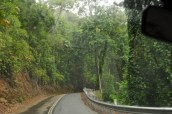 Into the lush greenery of the rainforest, and into the rain
