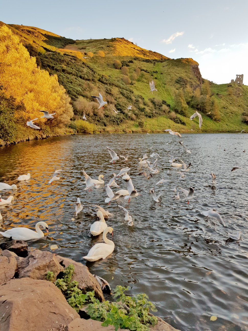 lisa-wheatley-swans-430332-unsplash.jpg