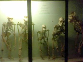 Horniman museum (13)