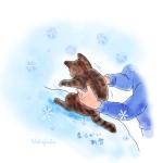 雪で拭かれる猫