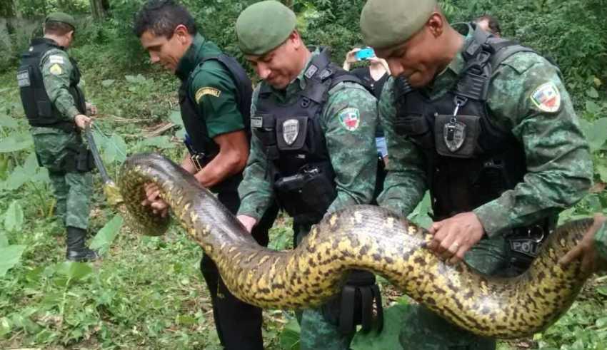 Imagem Divulgação/Batalhão Ambiental