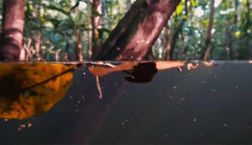 Documentário mostra o Parque Nacional Anavilhanas como você nunca viu antes!