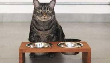 Pesquisa comprova que gatos copiam a personalidade dos donos/ Fonte: Google Imagens