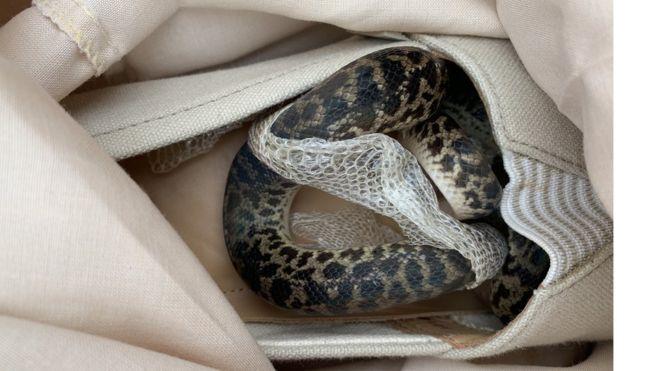 Ladrões roubam mala e se surpreendem ao saber que estavam cheia de cobras