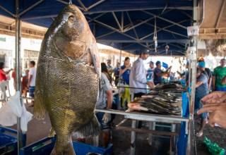 Tambaqui é um dos peixes mais valorizados no município de Tefé (Foto: Bernardo Oliveira)