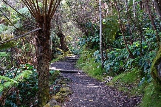 Hiking the Kilauea Iki Trail with kids