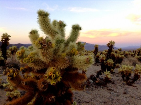 Top 5 Things to do in Palm Springs with Families