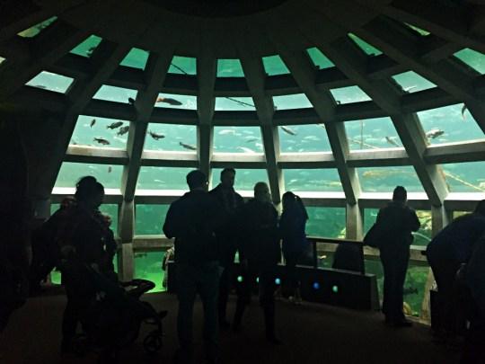Seattle Aquarium - CityPASS Seattle
