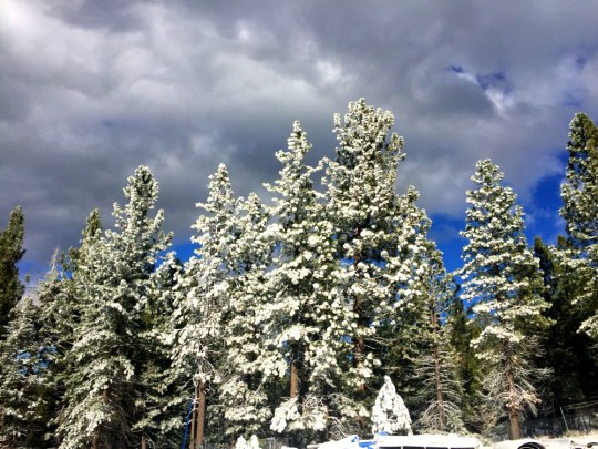 year in review: big bear