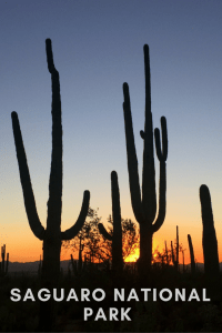 Visiting Saguaro National Park in One Day with Kids