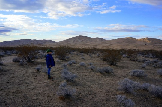 Exploring the Mojave National Preserve