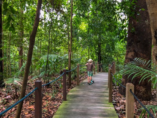 Any itinerary of Singapore with kids should include the Botanic Gardens