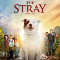 stray_profile