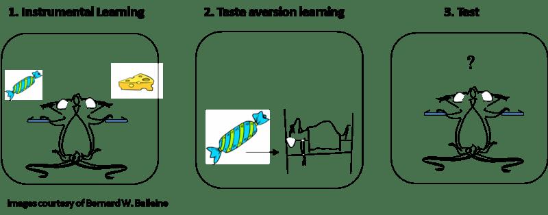 Fear acquisition association learning model mineka