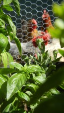 Fresh Basil that was growing in the pots. See the Layers?