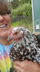 I really fell in love with my first rooster! Pumpkin was a kick!