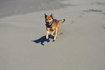 beach shasta7