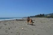 beach shasta8