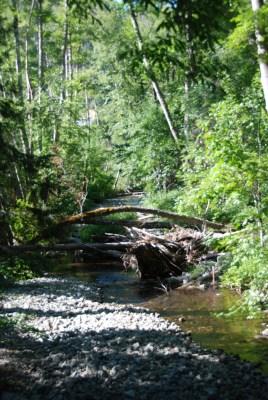 Nature creates a path
