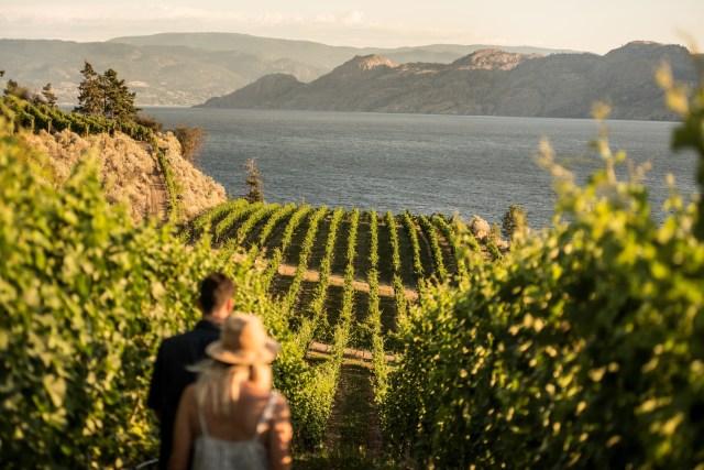 Vineyard Winery Tours Kelowna Okanagan BC