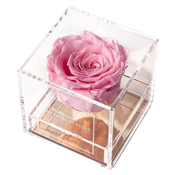 róża-pink
