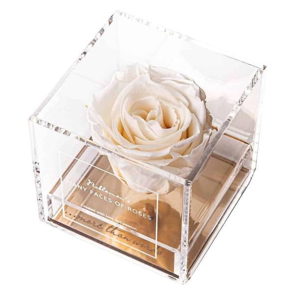 róża-creme
