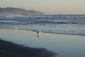 sea-gull-reflections