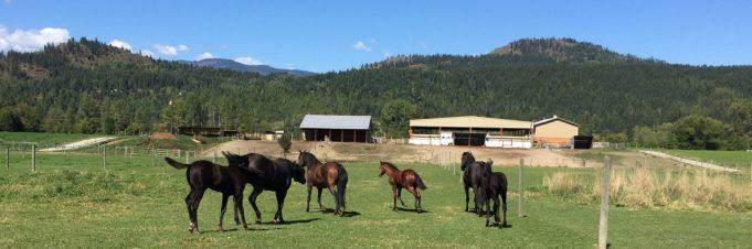 cropped-horses-bannner1.jpg