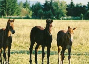 Horse Babies