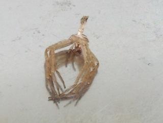 蜘蛛の抜殻.jpg