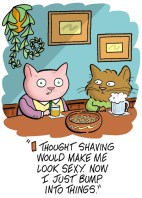 shaved cat card400