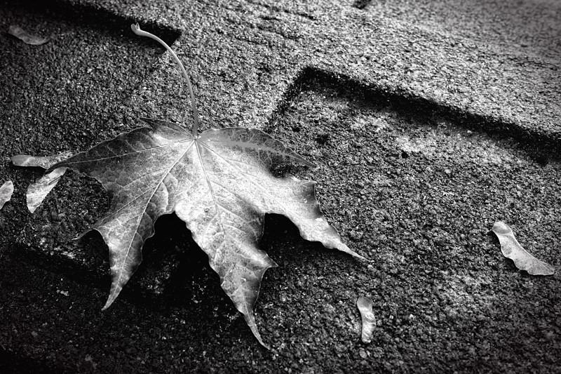 Herbstlaub auf Grabstein