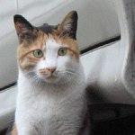 原宿野良猫日記-2