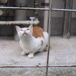 ひょうきん猫
