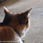 オリンパスPEN E-P1 試し撮り-居候猫