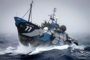 Steve Irvin of Sea Shepherd Global