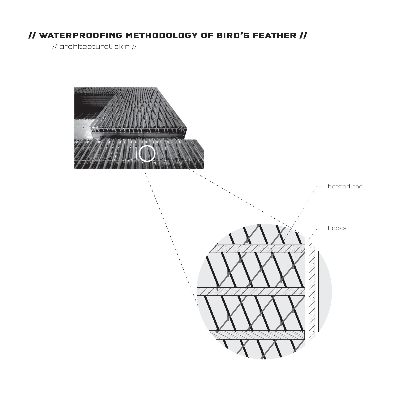 Biology Bird Feather Waterproofing Methodologies
